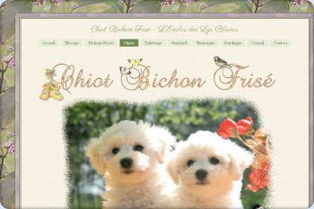 Cliquez pour visiter la page Chiot Bichon Frisé.