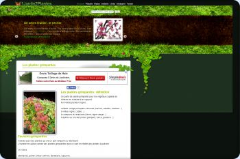 Cliquez pour visiter la page Les plantes grimpantes (à fleurs, persistantes...).